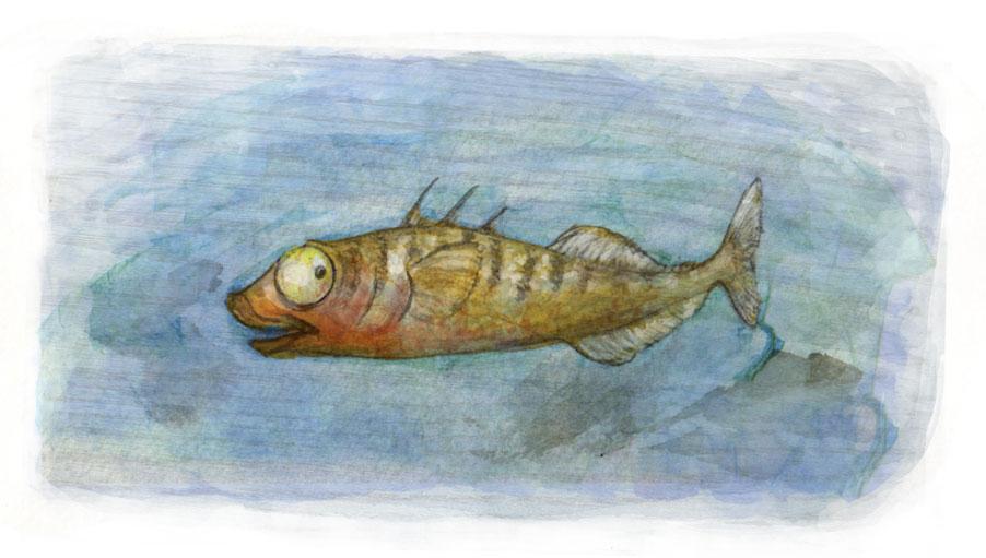 illustration stickleback fish nervous