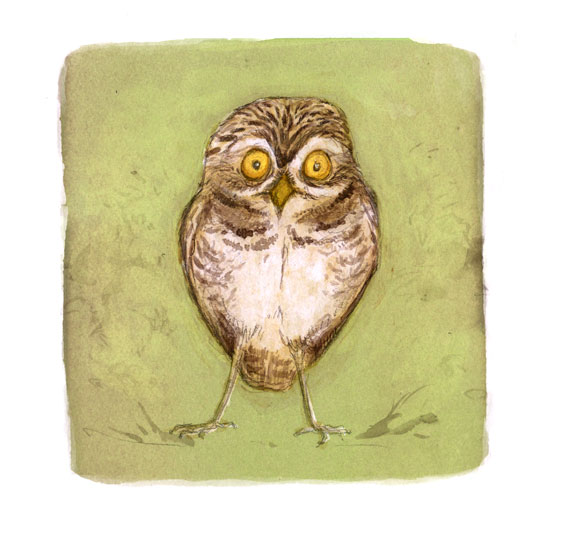 illustration burrowing owl