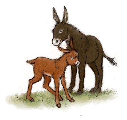 digital colour illustration two donkeys baby and mother